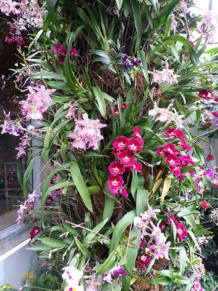 Orchid Show at Chicago Botanic Garden