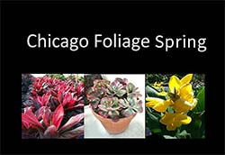 chicago-spring-book-black-2013-icon